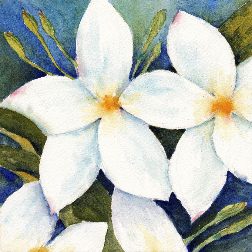 White Flower Paintings Gallery - Flower Decoration Ideas