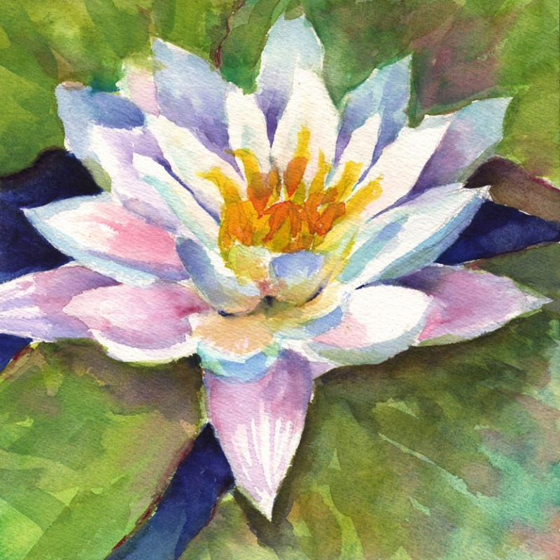 Day 52 Waterlily